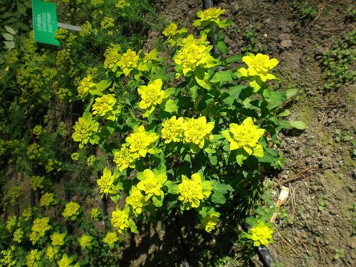 Monivuotisia Kukkia
